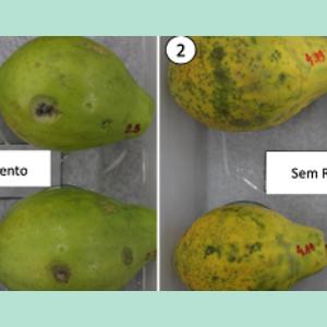 Pesquisadores patenteiam revestimento que aumenta a vida útil de frutas