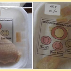 Embalagem que indica qualidade do frango é desenvolvida